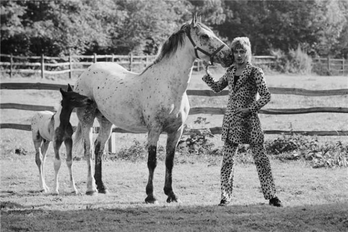Pilkullinen ori – rinnallaan kaksi hevosta.